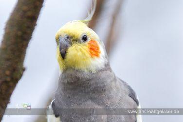 160327-Hofer-Zoo-07-4524