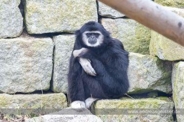 160327-Hofer-Zoo-08-4535