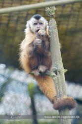 160327-Hofer-Zoo-11-4554