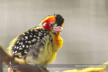 160327-Hofer-Zoo-16-4577