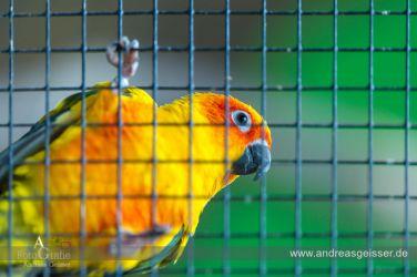 160327-Hofer-Zoo-19-4594