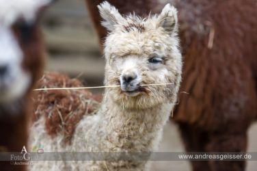 160327-Hofer-Zoo-28-4637