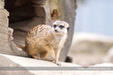 160327-Hofer-Zoo-29-4647