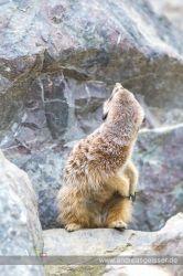 160327-Hofer-Zoo-30-4652
