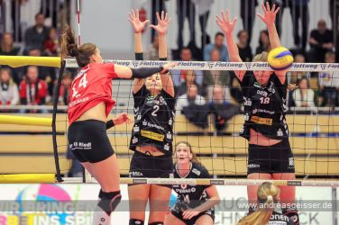 161217-volleyball-vib-dresden-22-8179